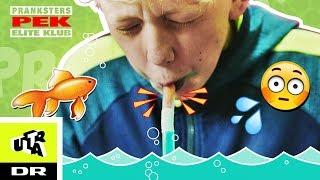 Sådan faker du at spise en guldfisk | PEK - Pranksters Elite Klub | Ultra
