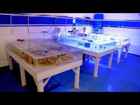 Vlog 18: Huge Progress Update at the Reef Builders Studio