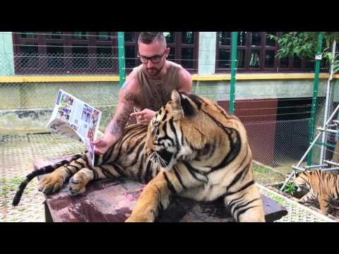 When Your Pet Tiger Is Your Best Friend...