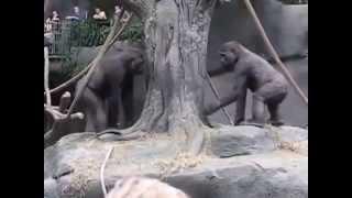 Repeat youtube video Gorillerin doyumsuzca sex keyfi | LilTV
