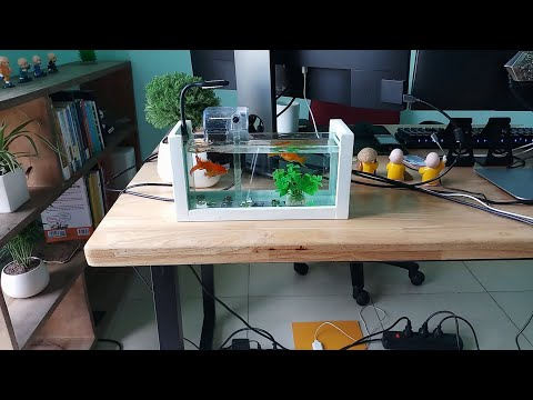 introducing-wooden-frame-mini-fish-tank-for-work-table