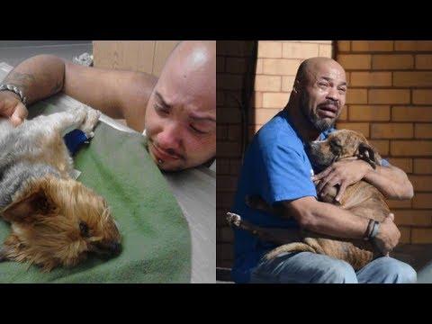 Болеют ли сальмонеллезом собаки