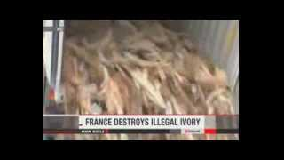 Illegal tusks destroyed in Paris