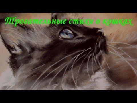 ТРОГАТЕЛЬНЫЕ СТИХИ О КОШКАХ  TOUCHING POEMS ABOUT CATS