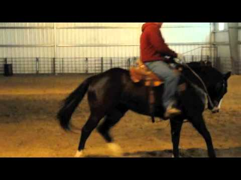 Google, 6 year old Gelding Travel Video