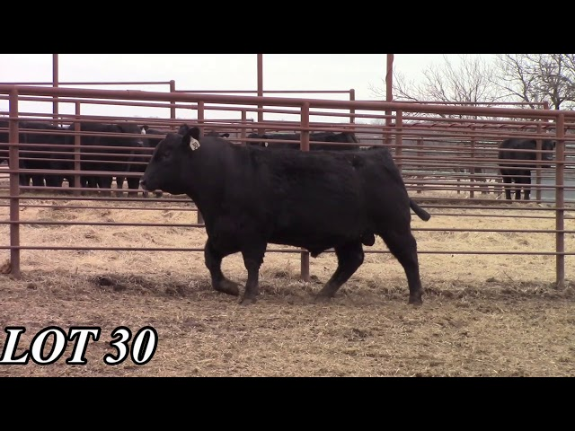 Mead Angus Farms Lot 30