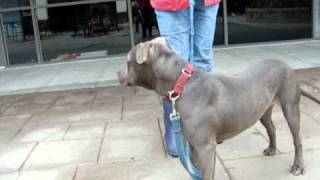 Downtown Dog Rescue- Handsome
