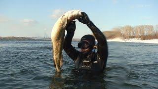 spearfishing for burbot. подводная охота на налима.(spearfishing for burbot. подводная охота на налима ▱▱▱▱▱▱▱▱▱▱▱▱▱▱▱▱▱▱▱▱▱▱▱▱▱▱▱▱ ВИДЕО канала : Максим..., 2016-07-08T15:26:51.000Z)
