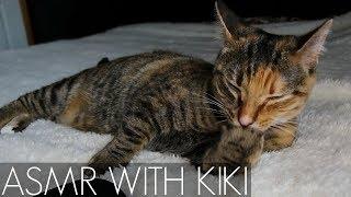 ASMR - Cat Purring, Grooming, Licking, & Eating 😻 LOOPED // No Talking
