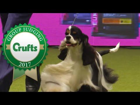 Gundog Group Winners Interview | Crufts 2017