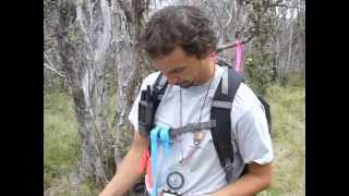 Feathered Colonizers - Rare bird monitoring in Hawaii and American Samoa