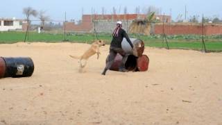 Dog Training In Egypt(dogs & More Academy)for More Info:01147279244