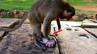 Big monkey hits baby monkey nearly to die