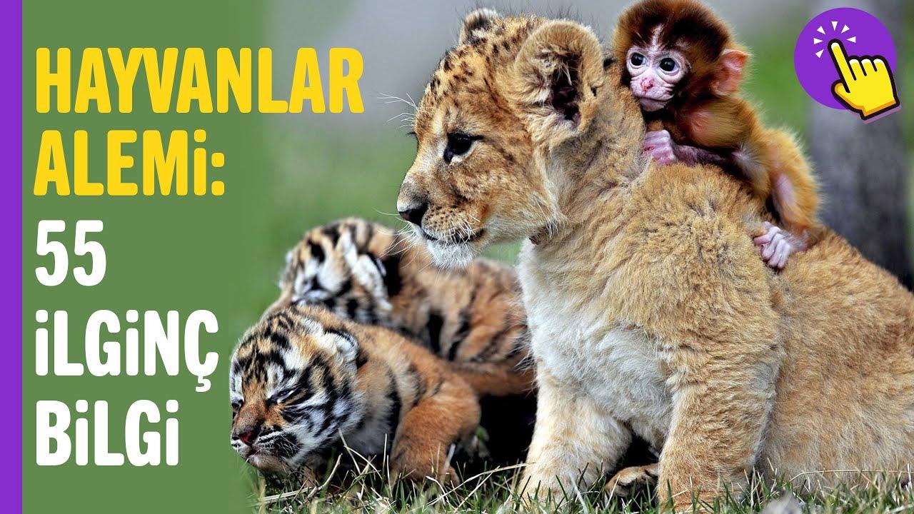 Hayvanlarla İlgili OHA Diyeceğiniz 55 İlginç Bilgi | Hayvanlar Alemi | İlginç Bilgiler