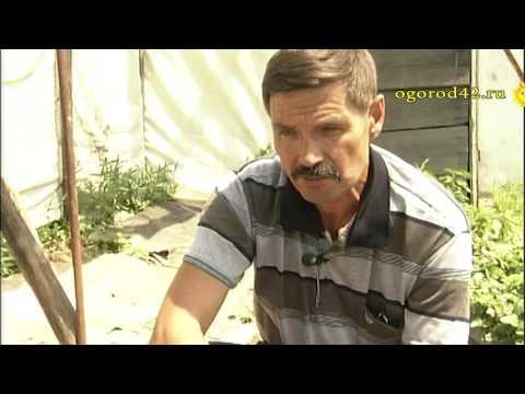 Сергей Клоков о выращивании винограда в Сибири