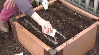 How to plant carrots and beets