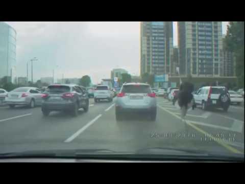 Всадник на страусе бегает по Аль-Фараби в Алматы