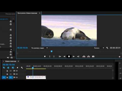 Как зеркально отразить видео в premiere pro