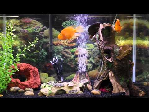 1hr relaxing music Aquarium Screensaver Fishtank HD