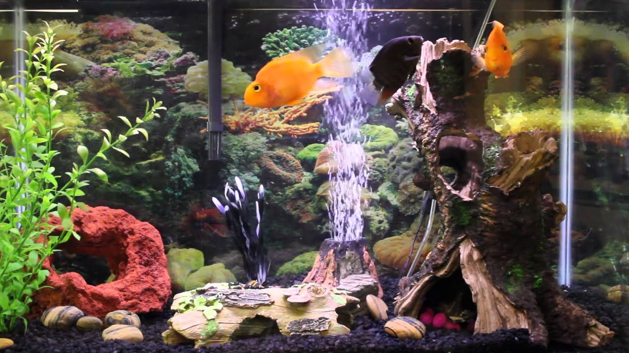 1hr relaxing music Aquarium Screensaver Fishtank HD - YouTube