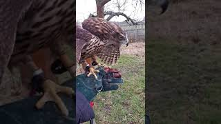 Trening z Lalą Jastrząb Gołębiarz