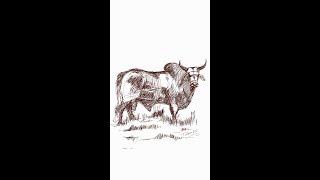 Bull Drawing | How to draw Bull | Bull Rapid Sketch