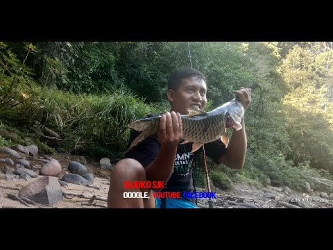 Hampala (Hampala Macrolepidota), Monster Sungai Arus Deras
