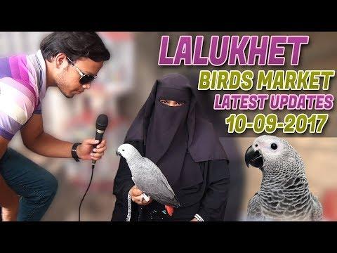 Lalukhet Birds Market Latest Updates 10-9-2017 Rare Birds for sale In ( Urdu/in Hindi