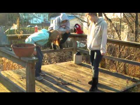 holland high global studies 2 video