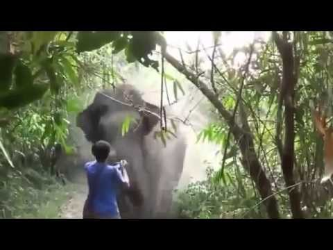 Astonishing video shows moment huge bull elephant charges at tourist   and he stands his ground