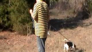 Training A Dog To Track Wounded Deer
