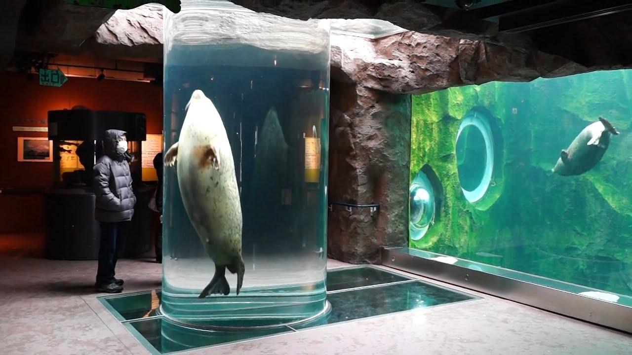 旭山 動物園