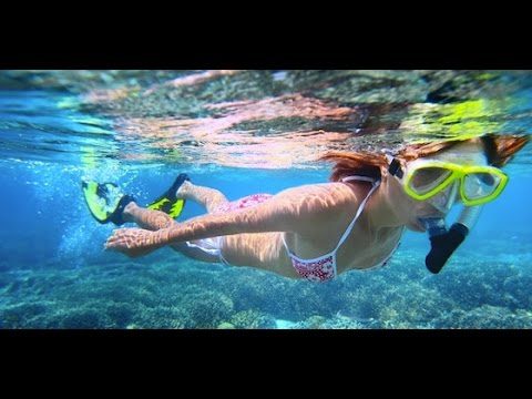 Pacific Ocean Under Water Fish & Animals