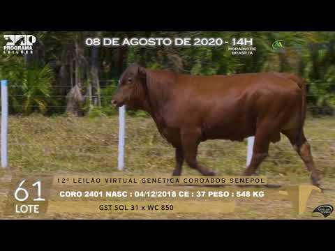 LOTE 61 CORO 2401