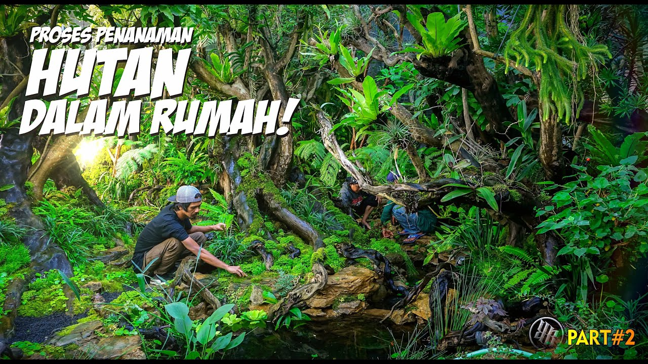 Download Menuju Finishing Hutan Hujan Buatan // part 2