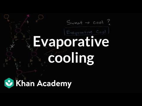 Evaporative cooling | Water, acids, and bases | Biology | Khan Academy