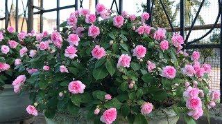 Como Cultivar lindas flores no seu jardim