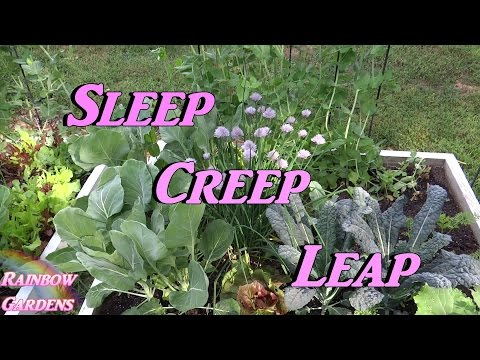 Sleep, Creep, & Leap! Perennial Herbs - How to Grow Tips & Tricks