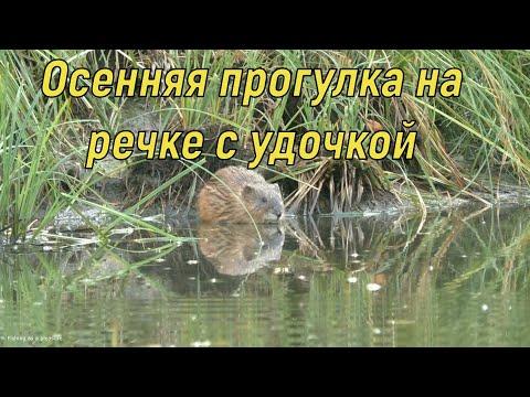 Вопрос: Каково значение губок для сообщества водных животных и рыболовства?