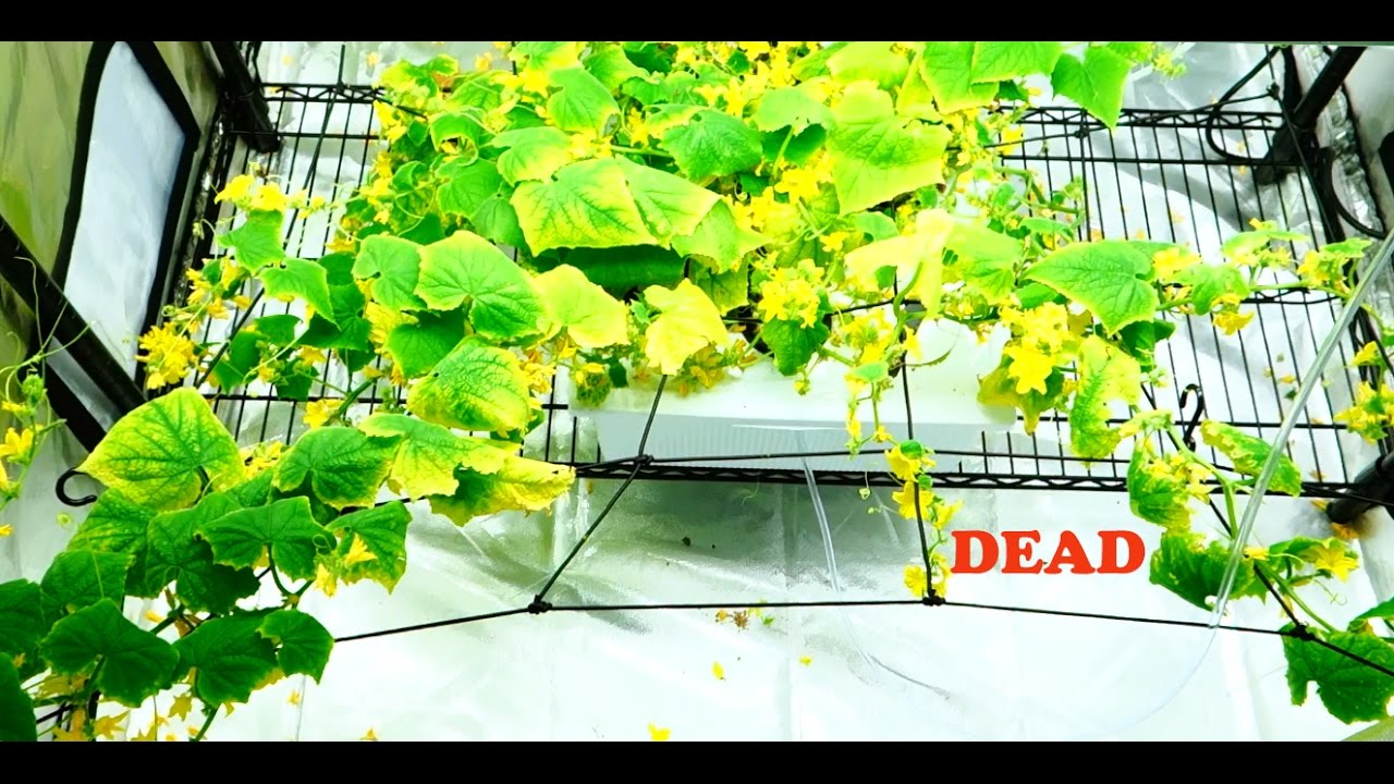 Hydroponics with your own hands for cucumbers and tomatoes. Equipment for growing vegetables