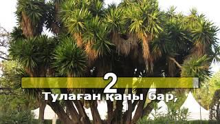 Тоқтар Серіков - Сыған серенадасы (қазақша караоке, минус)