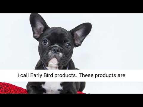 Pet Authority Review, Bonus From Gaz Cooper – Amazon Affiliate Pack For Pets Niche