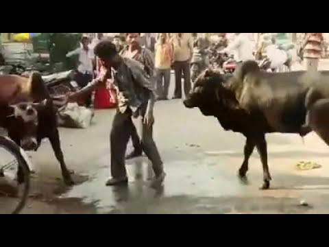 Bagi 2 Full Movie Download Hindi Leaked
