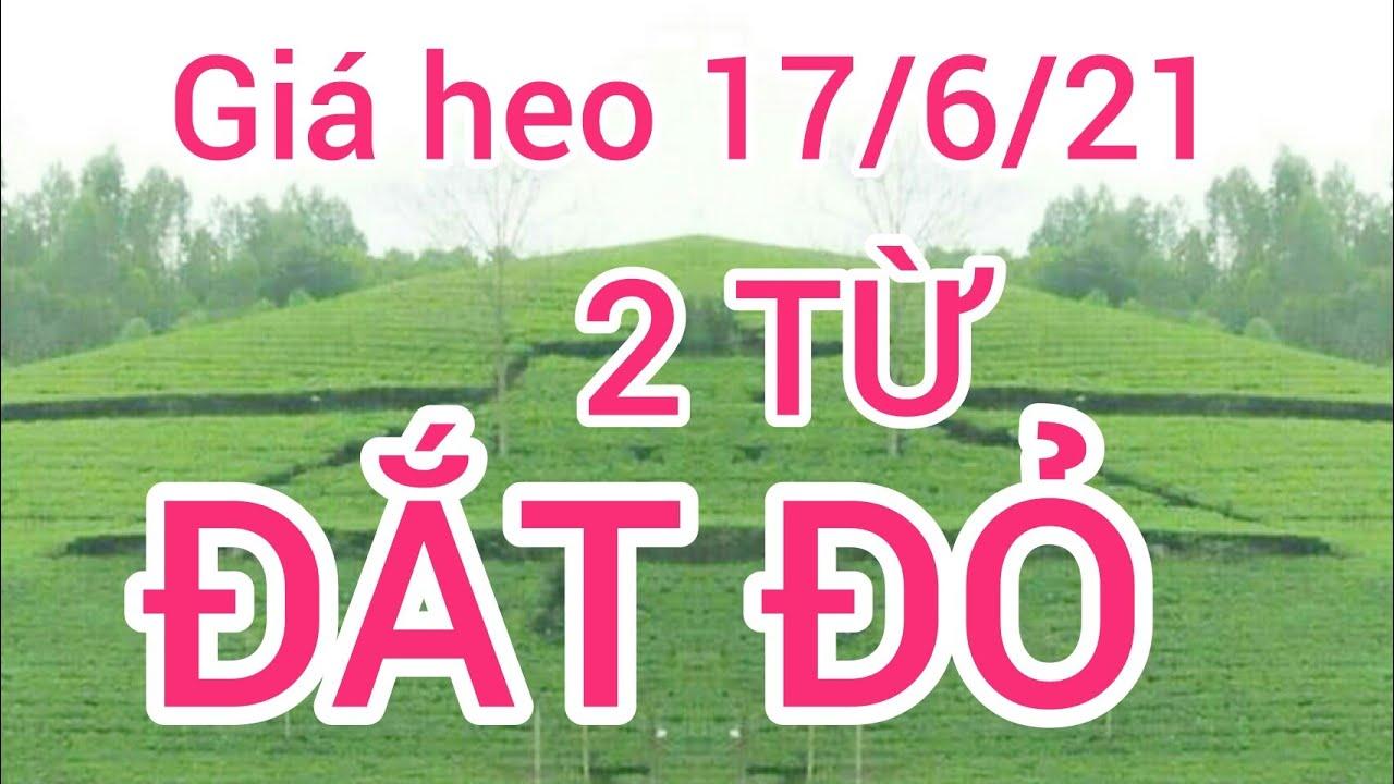 Giá heo hơi (lợn hơi) ngày 17/6/21. 2 từ Đắt đỏ