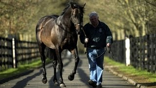Lord Shanakill(Lord Shanakill is a stallion standing at the Irish National Stud. The Facts Tough and consistent miler (18 starts) Won or placed in Dewhurst Stakes Gr.1, Prix ..., 2013-11-27T11:51:45.000Z)