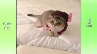 Funny Animal Videos   猫 かわいい   猫 おもしろ   最も面白い猫の動画 2017 #89