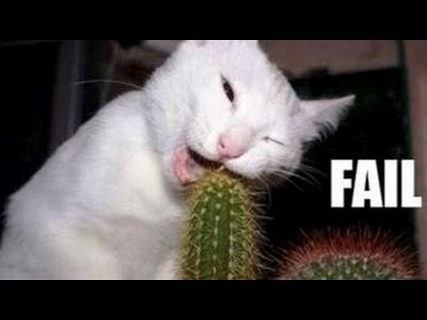 Funny Cats Compilation - Funny Videos  - Funny Animals
