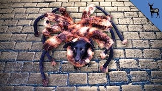 Mutant Giant Spider Dog Real?