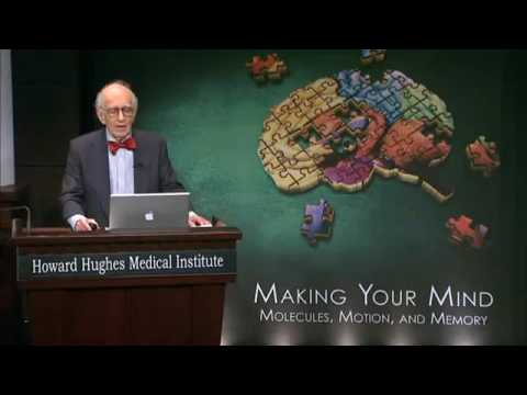 Mapping memory in the brain. Eric Kandel (2008)