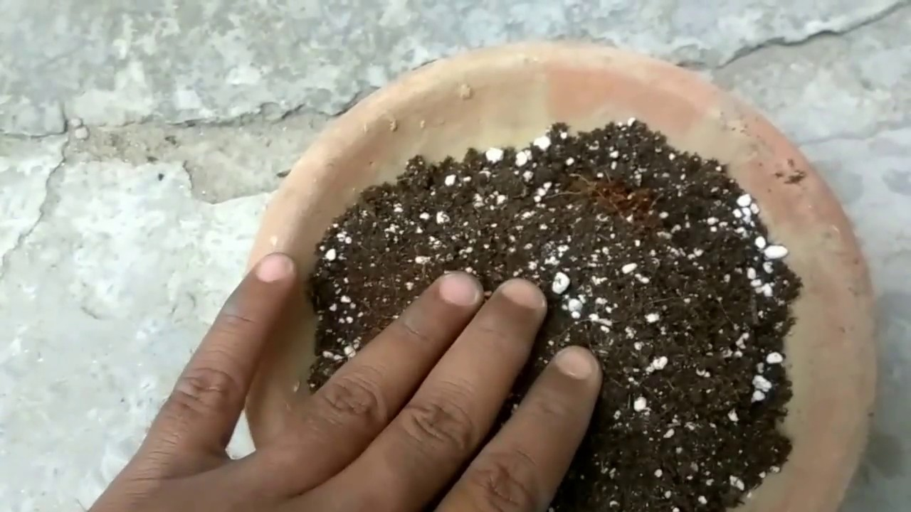What is perlite? How to use perlite in potting soil - YouTube